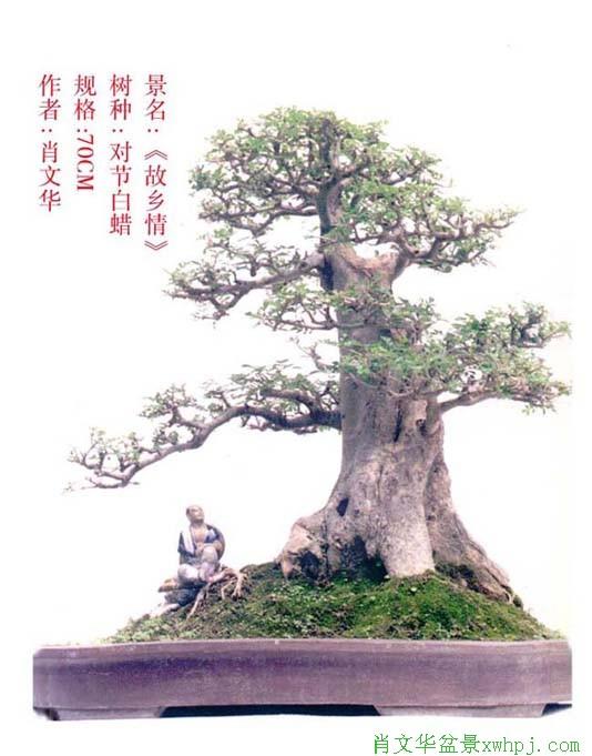 肖文华盆景